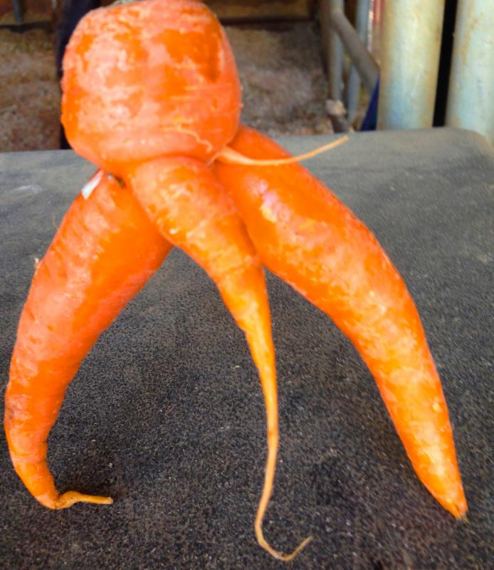 big boy carrot