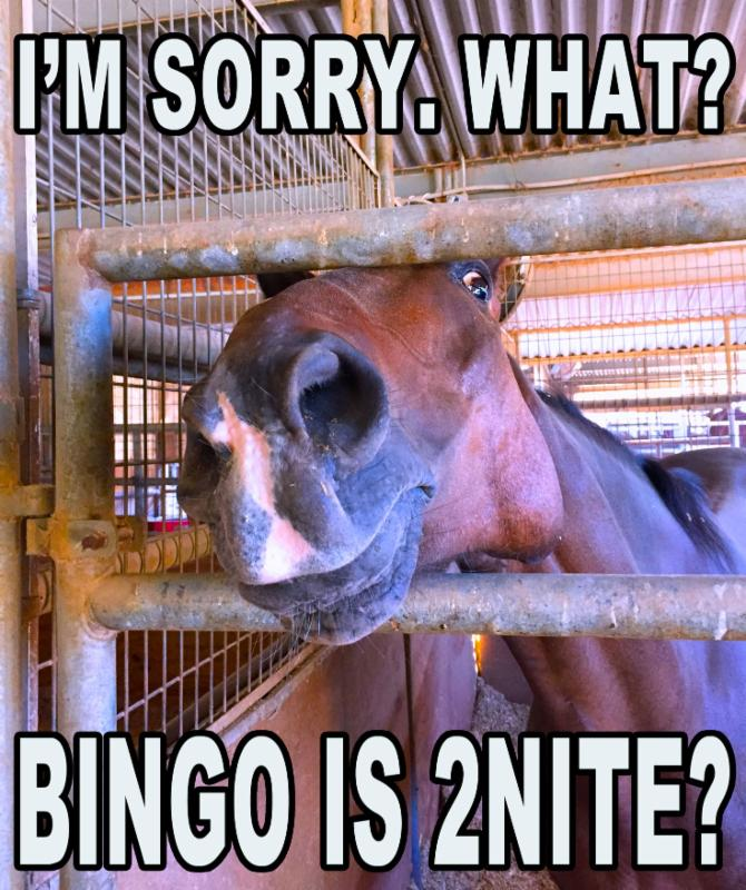 bingo-is-tonight-horse