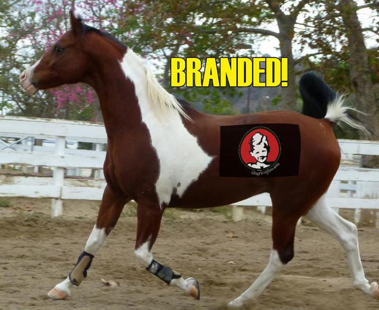 buddy-branded