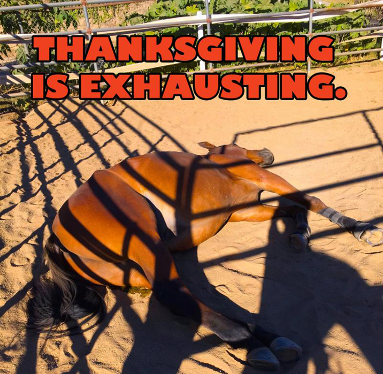 thanksgiving-horse-exhausting