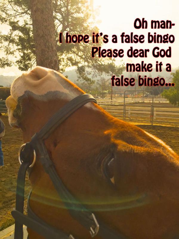false-bingo-buddy