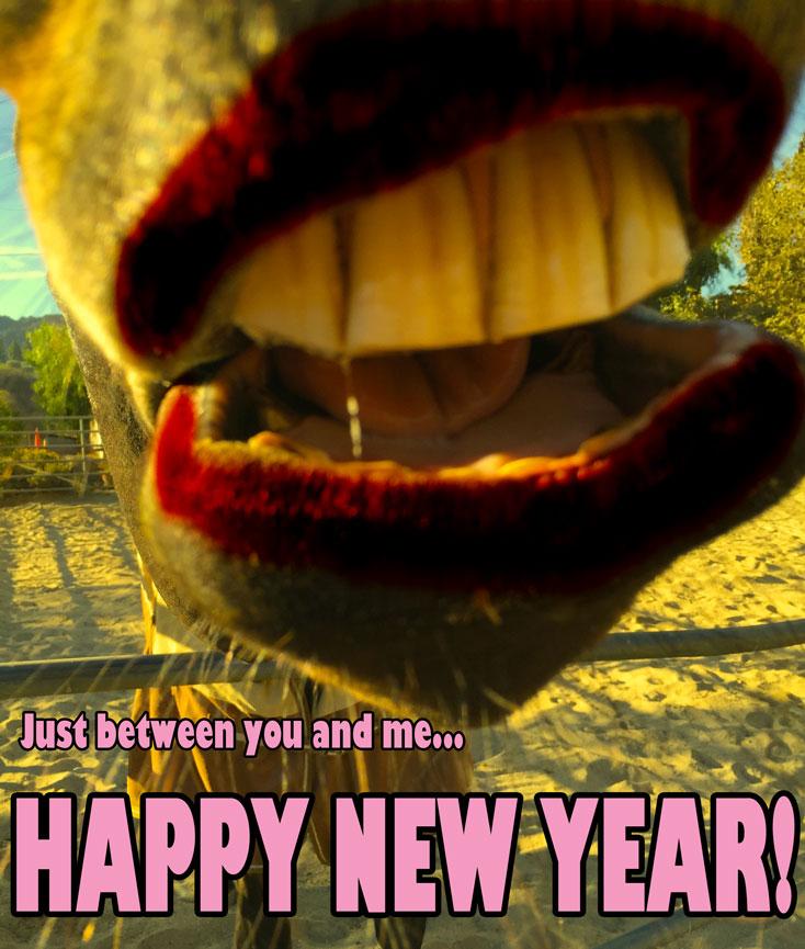 happy-new-year-horse