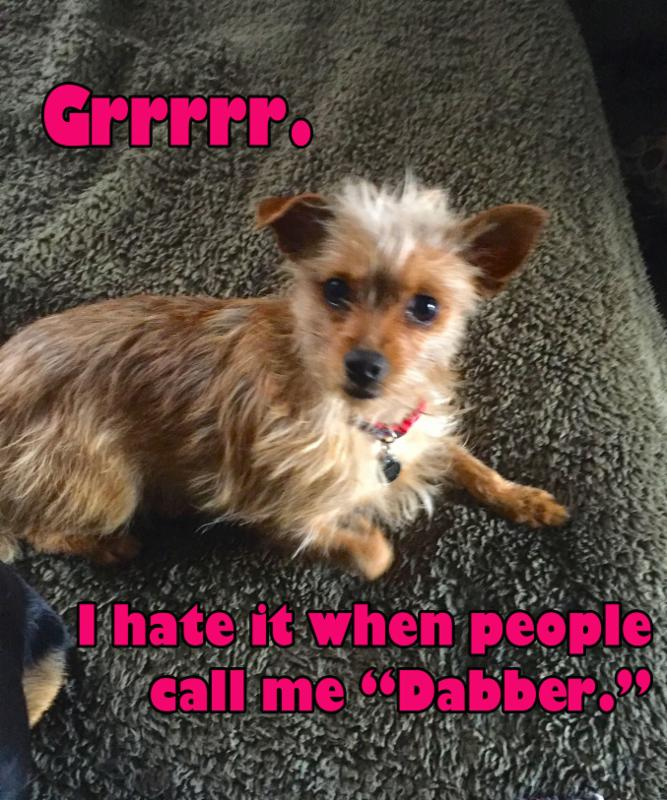 dabber-dog