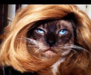drag-cat