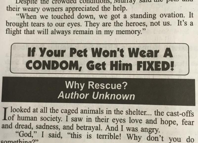 pet condom