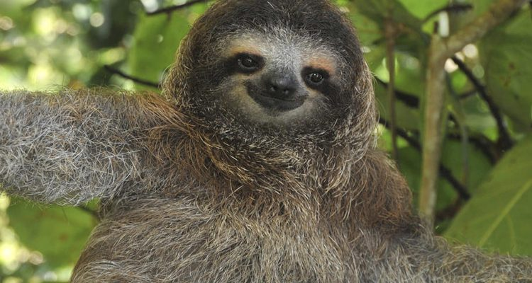 sloth-featured