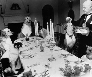 1984:  A butler serves a meal to a table of dogs in a Knightsbridge restaurant to mark the launch of a new dog food.  (Photo by BIPS/Getty Images)