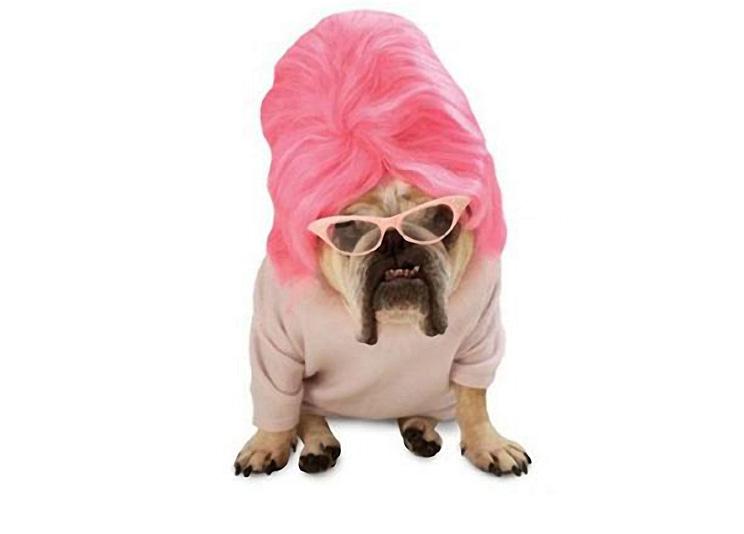 The Only Dog In Drag Bingo Boy Inc